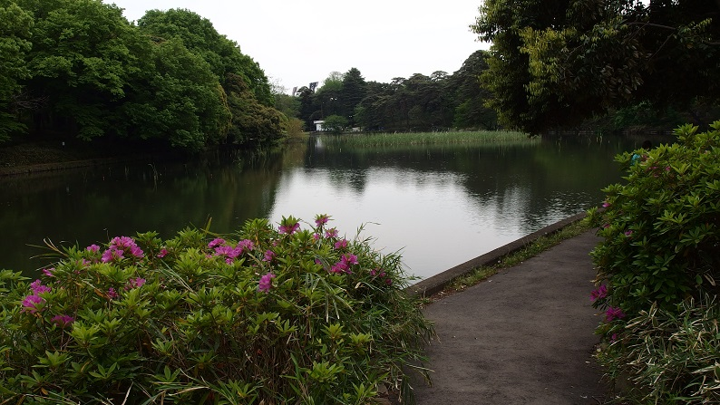 大宮公園池.jpg